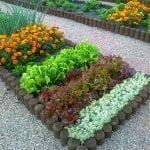 как сажать базилик семенами на рассаду