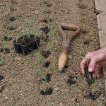 после чего можно сажать лук и морковь
