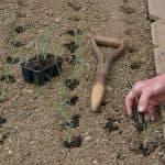 обработка ярового чеснока перед посадкой весной