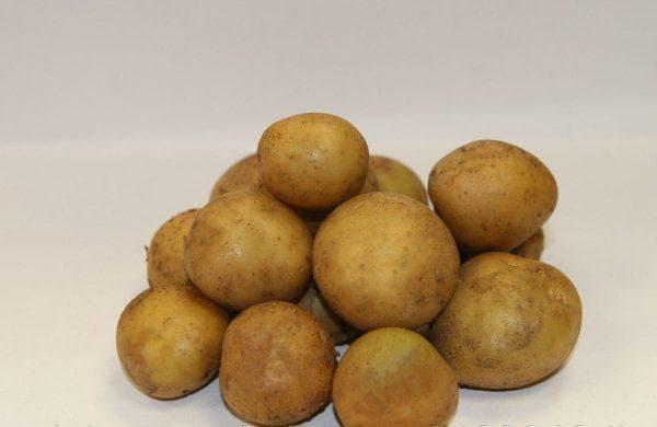 картофель Волжанин