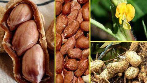 Как растт земляной орех