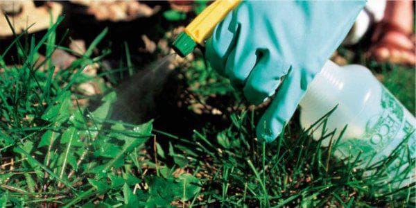химия против сорняков