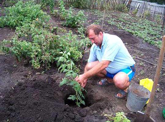 подкормка ягодных кустов