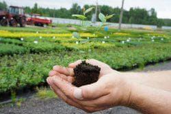 ежевика +в сибири выращивание