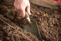 почва под сельдерей