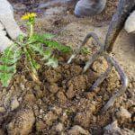 предпосадочная обработка клубней картофеля от колорадского жука