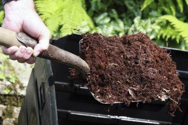 мульчирование шелухи от семечек как удобрение