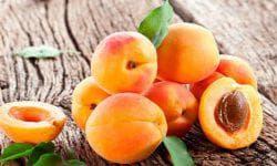 посадка абрикоса в саду