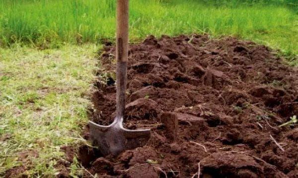 высадка растений от землеройки