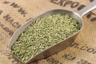 как сеять укроп в открытый грунт семенами