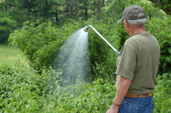полив в огороде