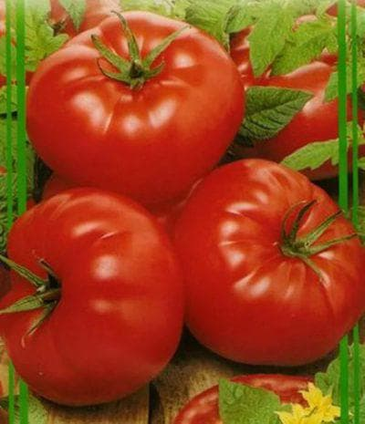 помидоры Татьяна