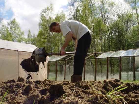 внесение удобрений в огороде