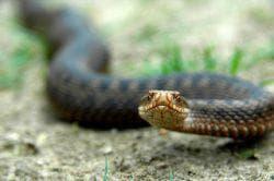 животные которые поймают змей на участке