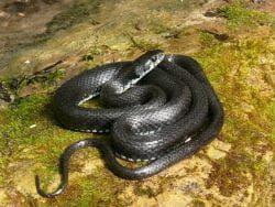 змеи на участке