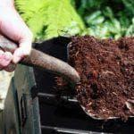 перепелиный помет как удобрение
