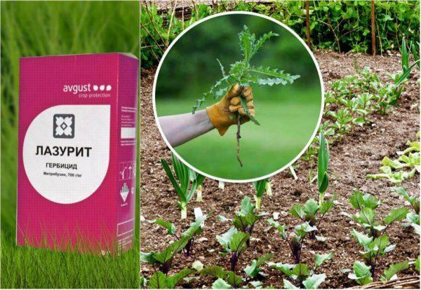 Лазурит от сорняков: инструкция по применению на картошке, отзывы