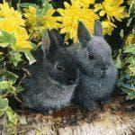 как лечить вздутие живота кролики