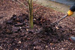 подкормка дерева алычи