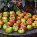 как избавиться от зеленой тли на яблоне