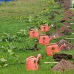 раннеспелые сорта цветной капусты