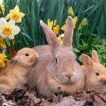 отзывы о кроликах породы Рекс