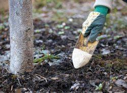 подкормка деревьев сливы
