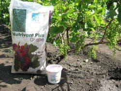 подкормка винограда