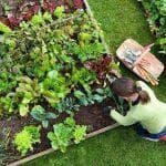 чем опрыскать клубнику весной для лучшего урожая