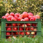 чем опрыскивать яблони от тли летом