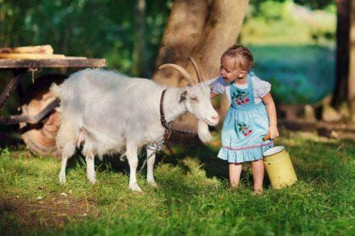 Лучшие породы молочных коз в России