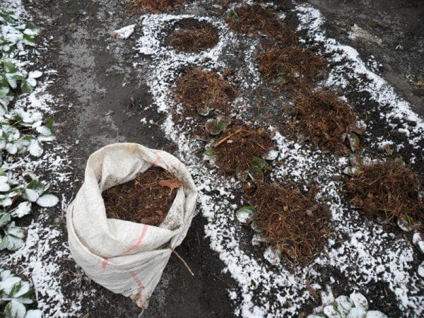 зимнее укрытие клубники