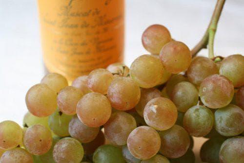 Виноград Восторг - фото, видео и описание сорта