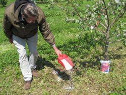 подкормка дерева груши
