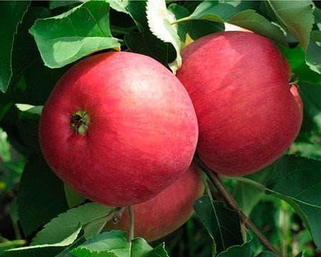 жигулевское яблоко