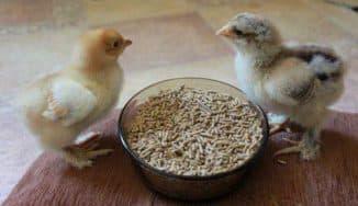 комбикорм солнышко для цыплят состав
