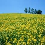 чем лучше засеять огород от сорняков