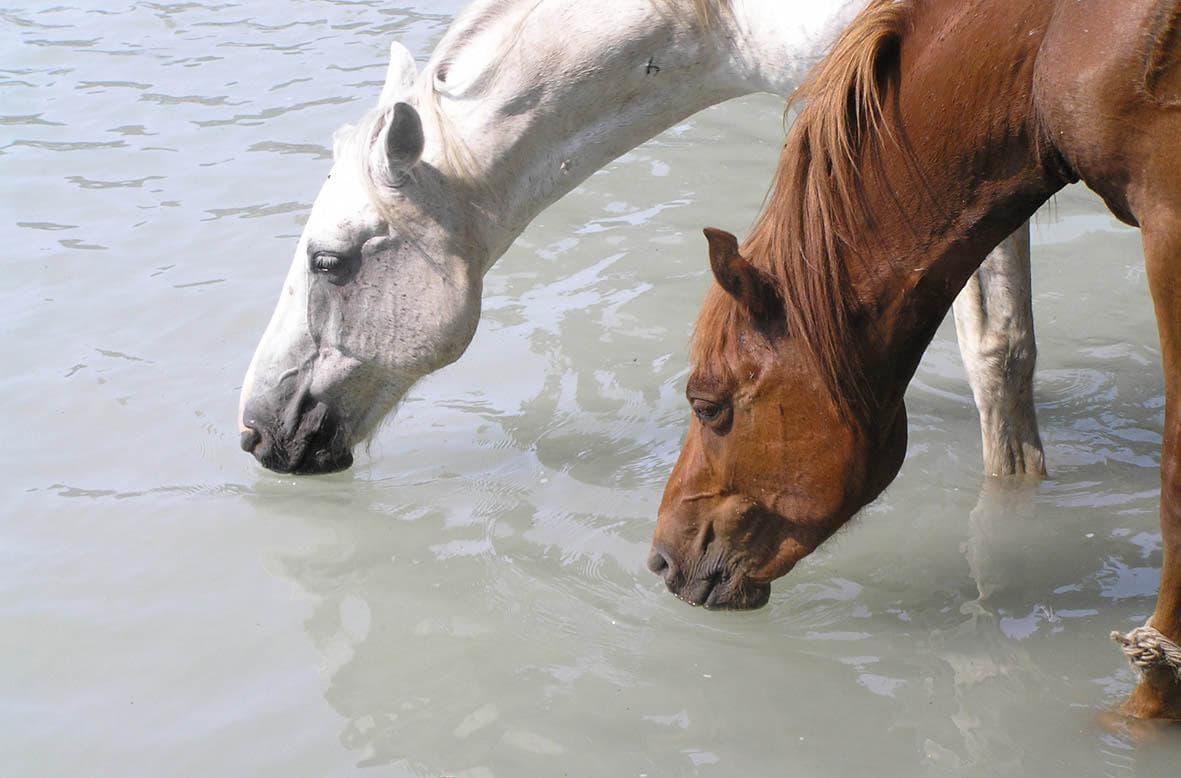 вода для животных