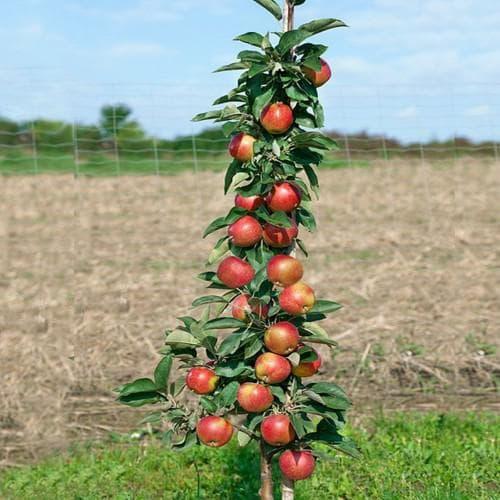 яблоко Валюта