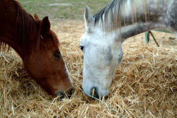 Что едят лошади из овощей и фруктов