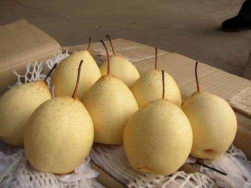Лучшие сорта груши для Урала - мои отзывы