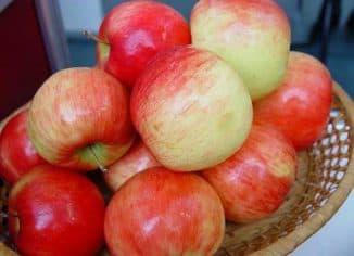 яблоня беркутовское описание фото