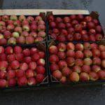 средство от тли на яблоне