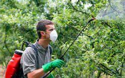 опрыскивать яблони во время цветения
