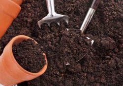 почва для посадки капусты