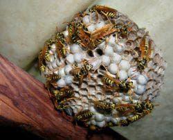 упаковка в целлофан гнезда шершней