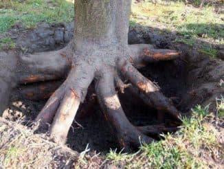как удалить корни деревьев с участка
