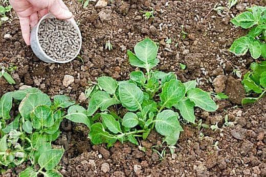 внесение удобрений в картофель