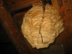 обработка пеной гнезда шершней