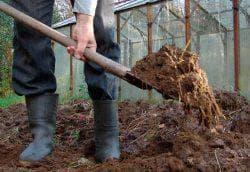 подготовка почвы под огурцы
